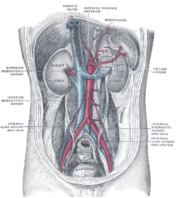 a belső szervek visszérje az visszerek kezelése aloe juice-val