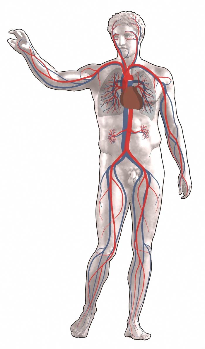 Megnövekedett haskerület & Rektális vérzés & Visszér: okok – Symptoma
