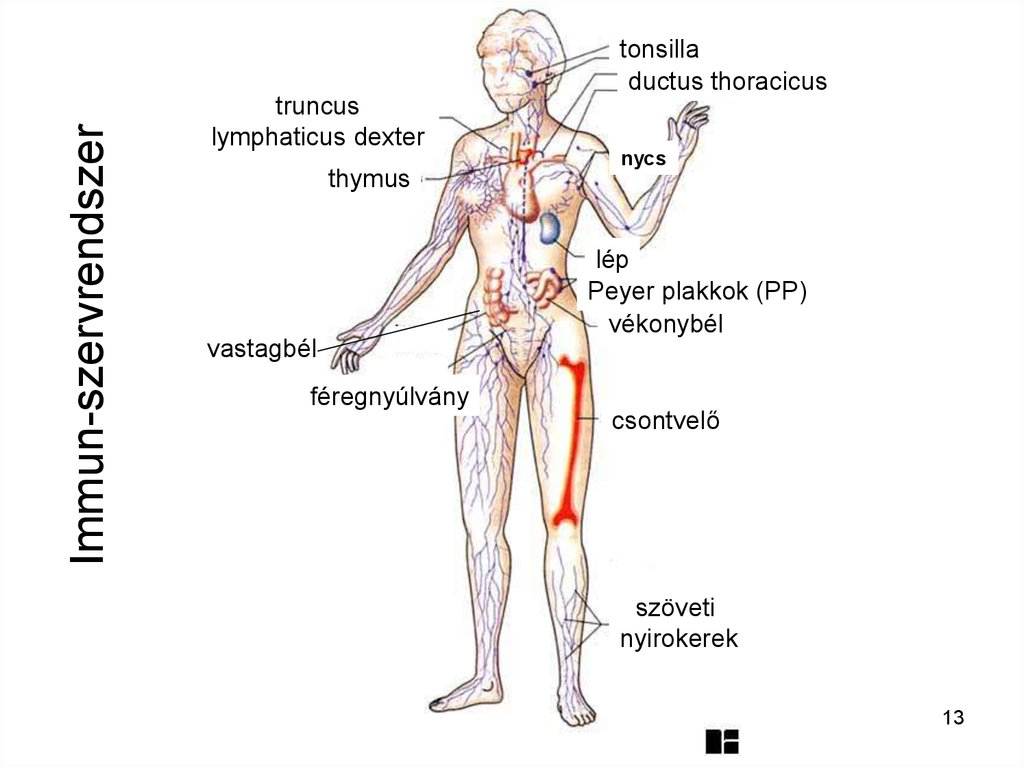 Lymphodrainage lábmasszázs lymphostasis (elephantiasis) - Okok