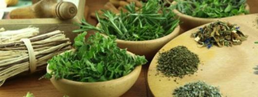 a visszér gyógyítására alkalmas gyógynövények