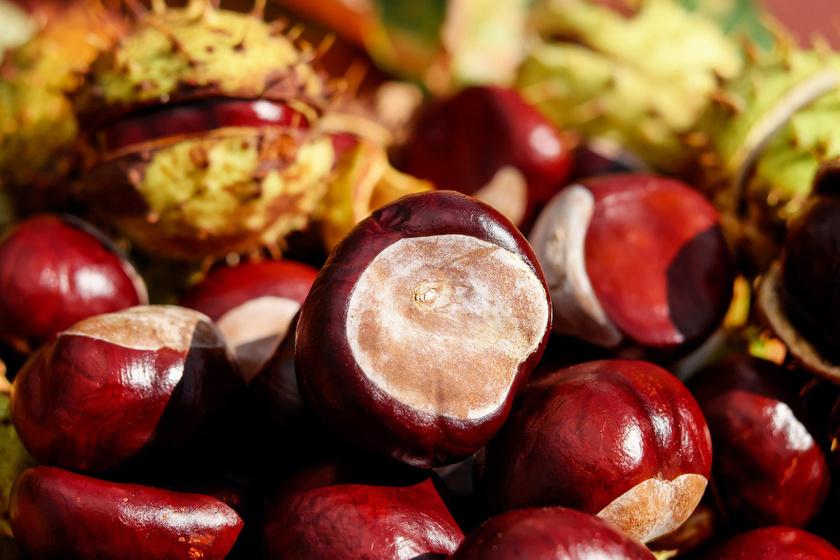 Vitamin Sziget - Cikkek / Gesztenye: 10 dolog, amit tudni érdemes róla