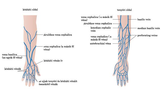 visszér artéria