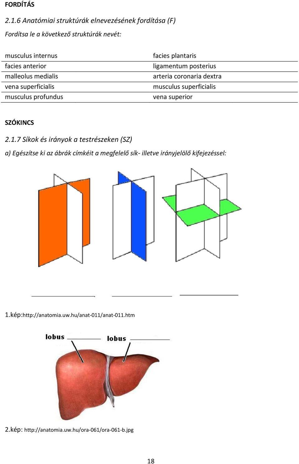 Seprűvéna – Wikipédia