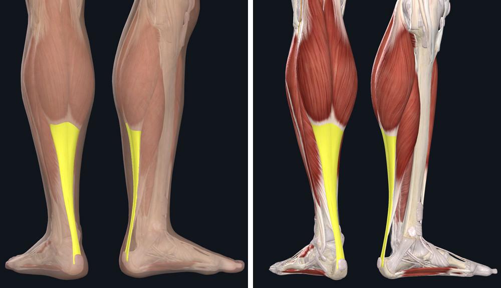 lecke a lábak varikózisából
