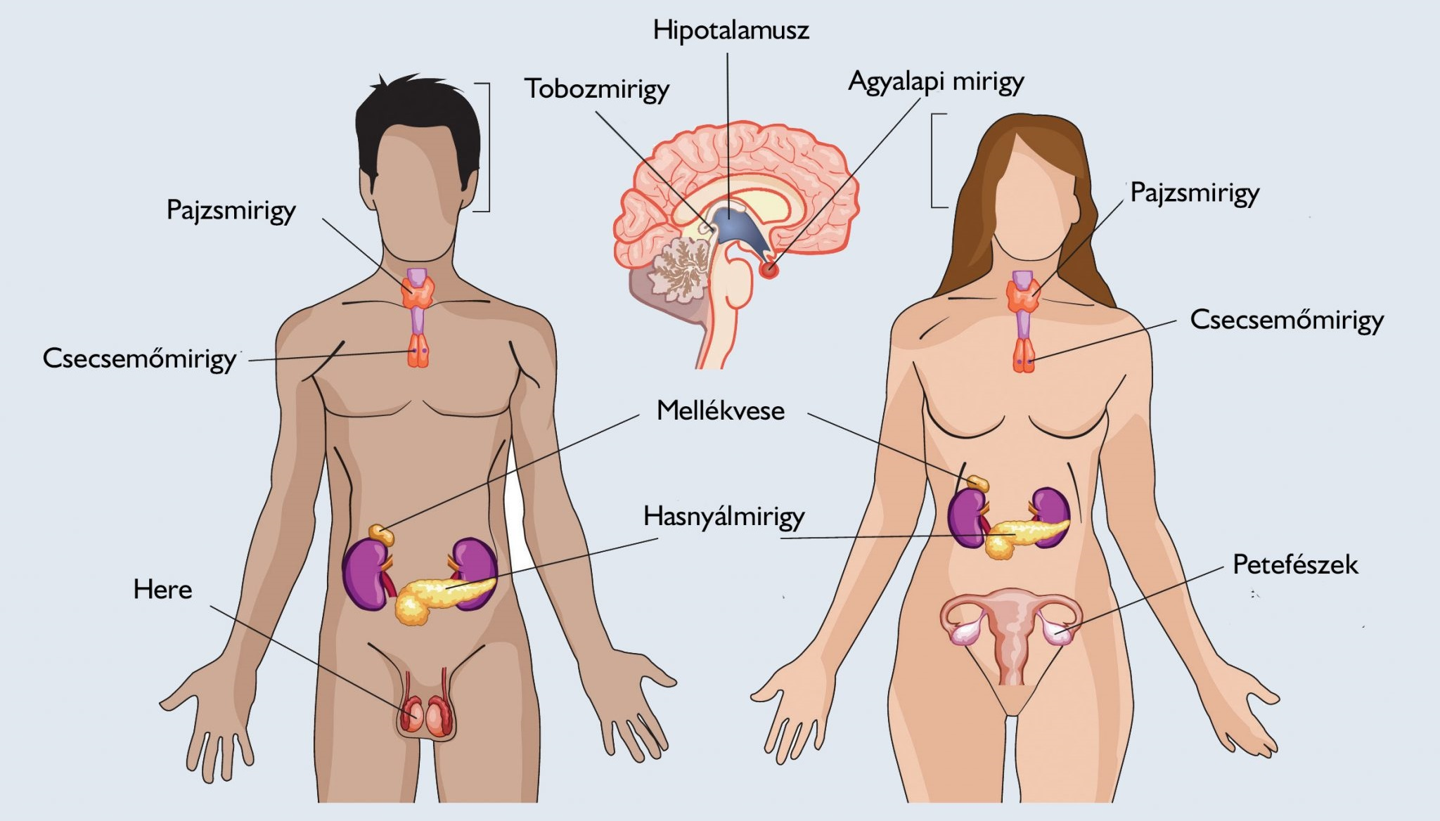 A medence visszérje a férfiak tüneteiben - Lágyrészdaganatok | anemzetikonyvekboltja.hu