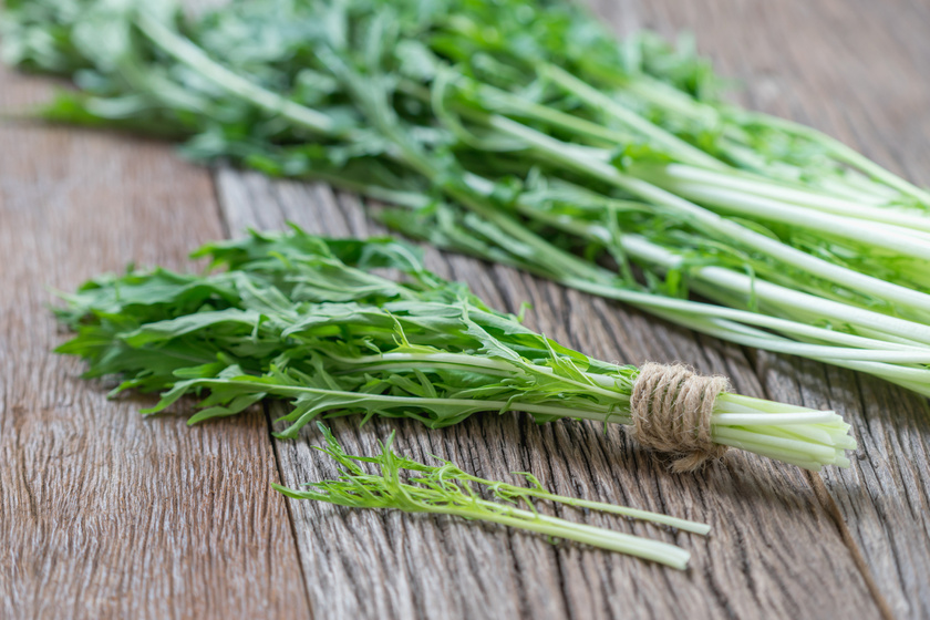 saláta levelek a visszér ellen milyen kenőcsök segítenek a lábak varikózisában