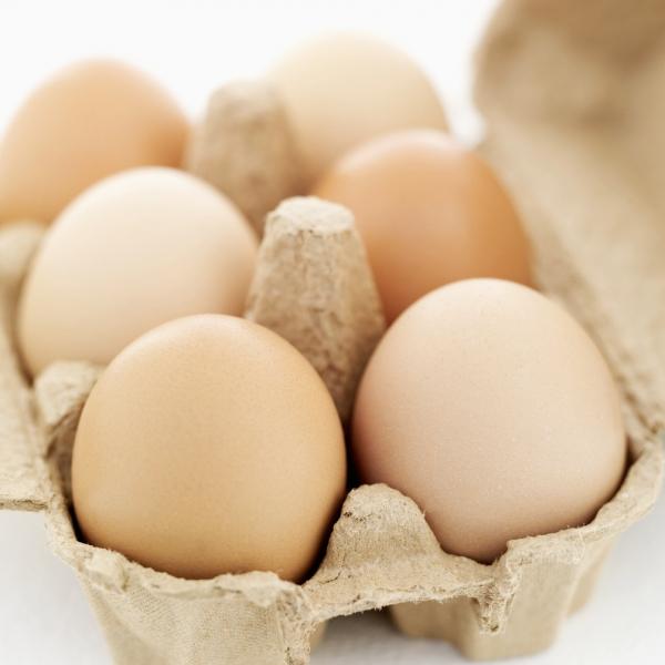 visszér tojás