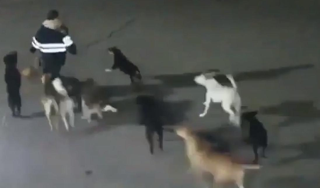 visszér egy kutya fotón)