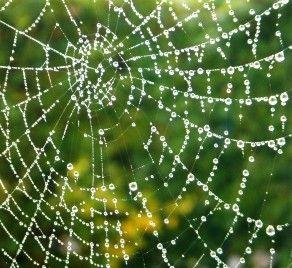 Pókhálótól a visszeres csomókig
