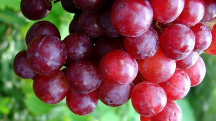 szőlővel ellátott visszérgyógyszer