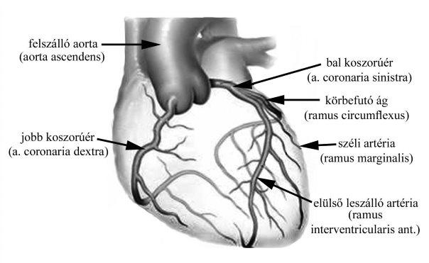 visszér alsó hátsó testmozgás